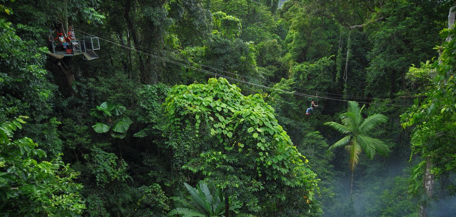 Daintree Rainforest day tours