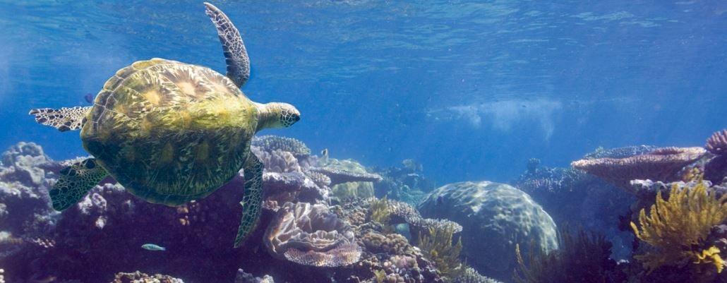 Michaelmas Reef, Cairns reef