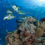 Great-Barrier-Reef-Cairns