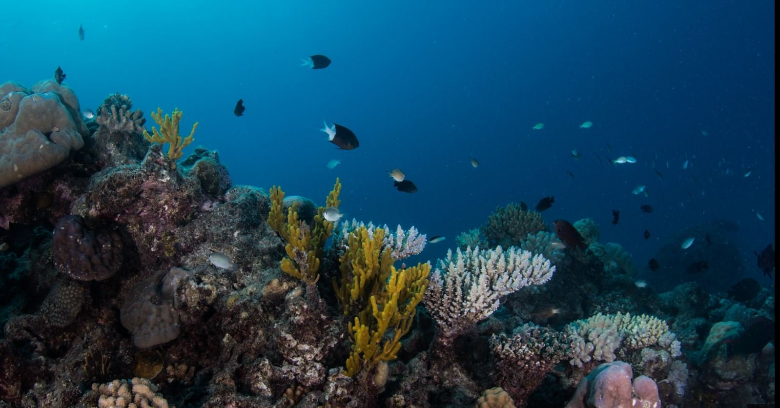Learn to scuba dive cairns reef - Dive great barrier reef ...