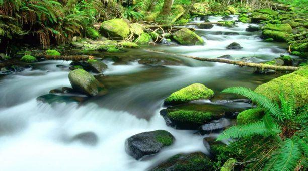 Daintree Rainforest