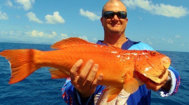 reef fishing Tour Cairns, North Queensland Australia