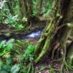 3 Day Reef and Daintree Rainforest