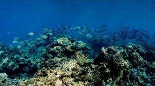 Cairns dive tours