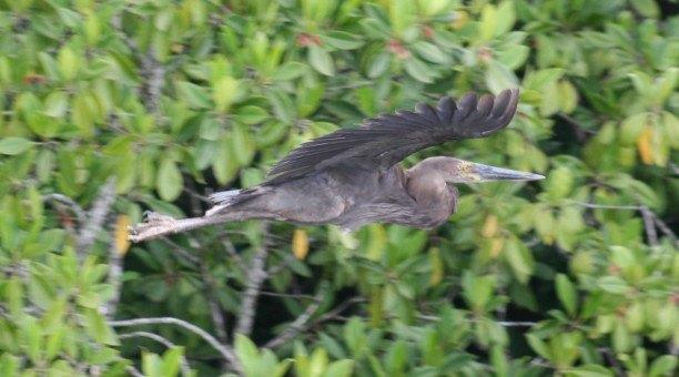 Cairns Birdwatching cruise