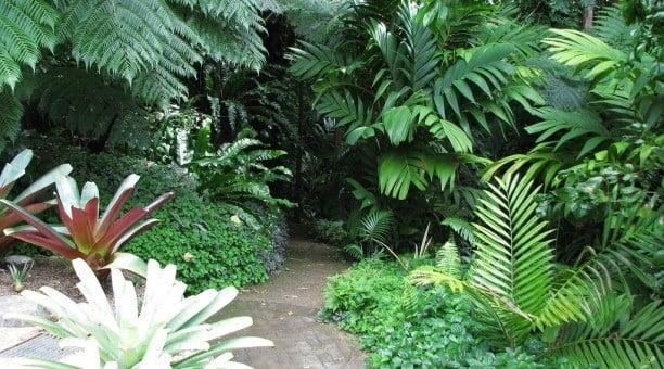 Cairns Botanical Gardens