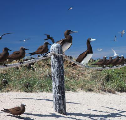 Michaelmas-Cay-bird-sanctuary, Cairns Travel