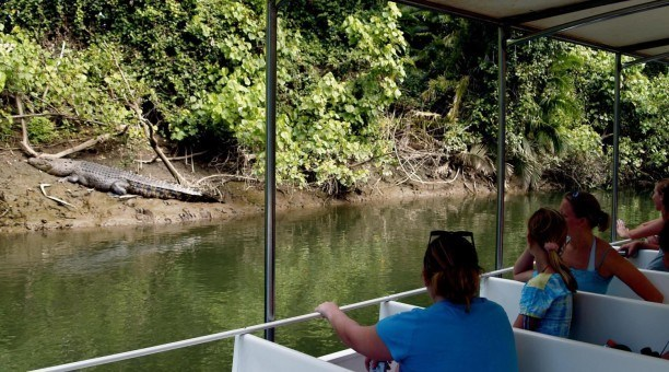Crocodile Cruise, Daintree River, North Queensland Australia