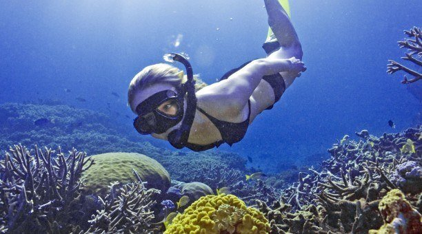 cairns snorkeling tour, Great Barrier Reef Australia