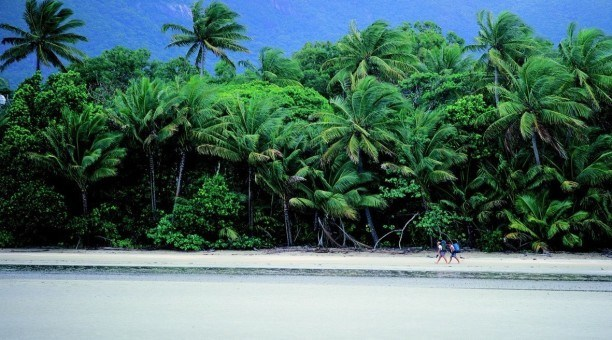 Cape Tribulation Beach Daintree Rainforest