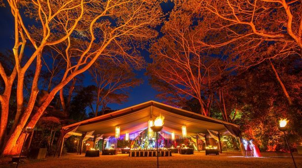 Flames of the Forest Gold Marquee