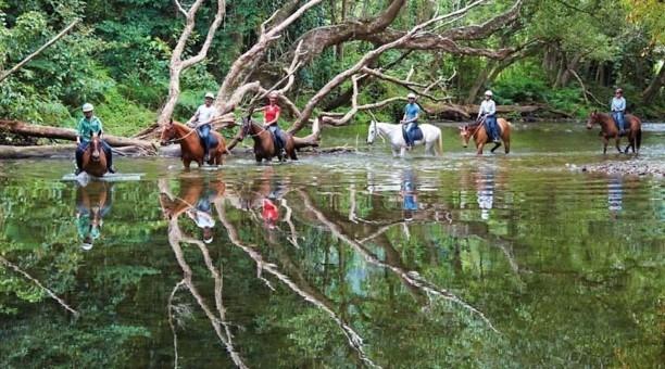 Cairns horse rides, North Queensland Australia