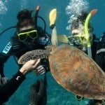 3 Day Liveaboard Resort Dive