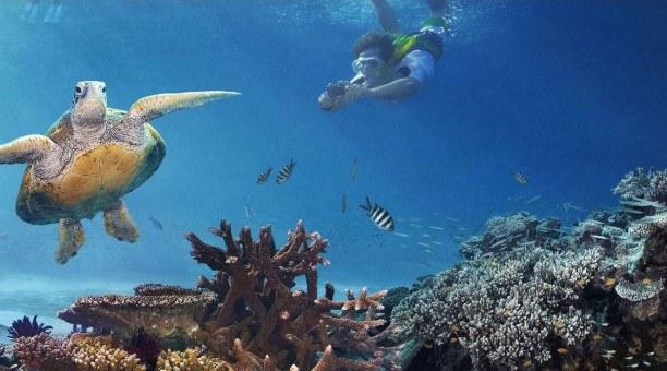 Snorkelling Great Barrier Reef