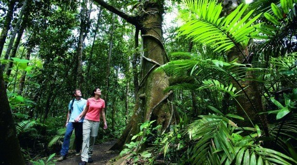 Cairns rainforest tour, North Queensland Australia