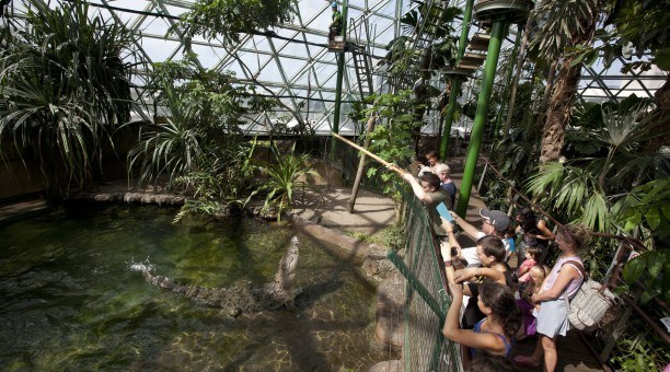 Cairns Wildlife dome and Zoom