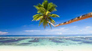 Tropical Beach Cairns