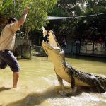 Hartley's Crocodile Adventures Half Day
