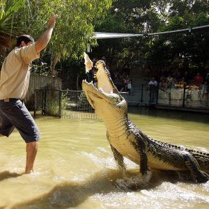 Hartley's Crocodile Adventures Half Day