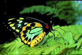 The Australian Butterfly Sanctuary