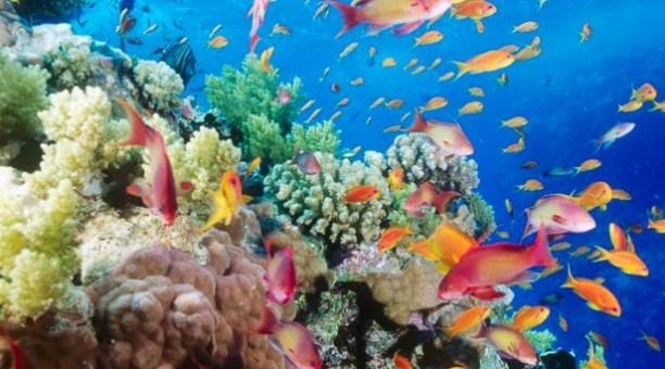 great barrier reef corals with fish