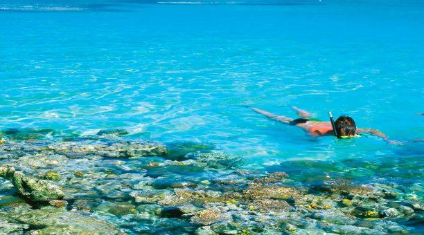 Great Barrier Reef snorkellers