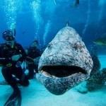 Great Barrier Reef Liveaboard 7 days
