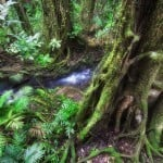 3 Day Reef and Daintree Rainforest (SN)