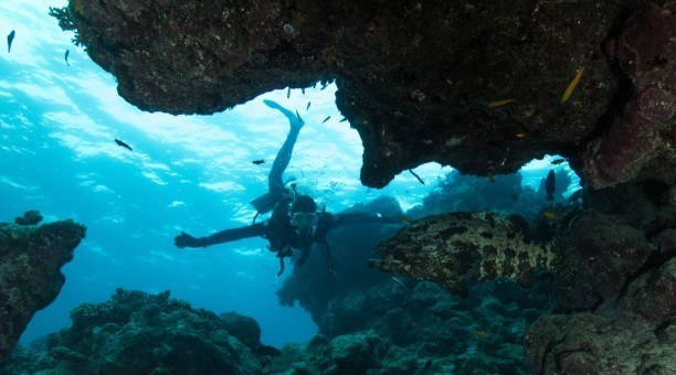 Great Barrier Reef swim through