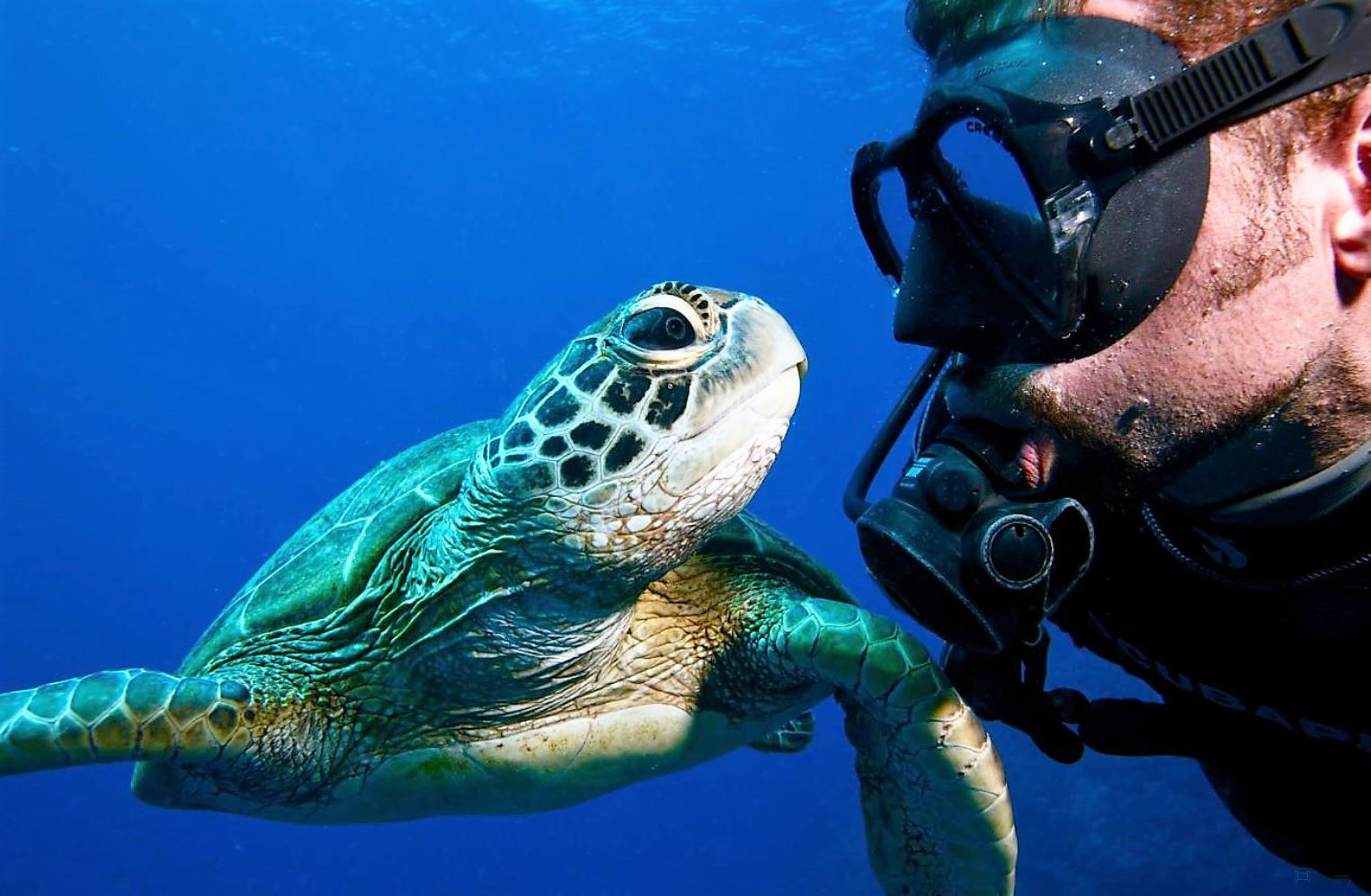 5 Day Learn To Scuba Dive Open Water Course | Great ...