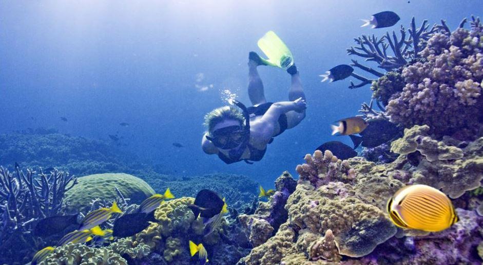snorkel - dive tables