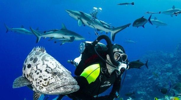 Coral Sea Scuba Diving