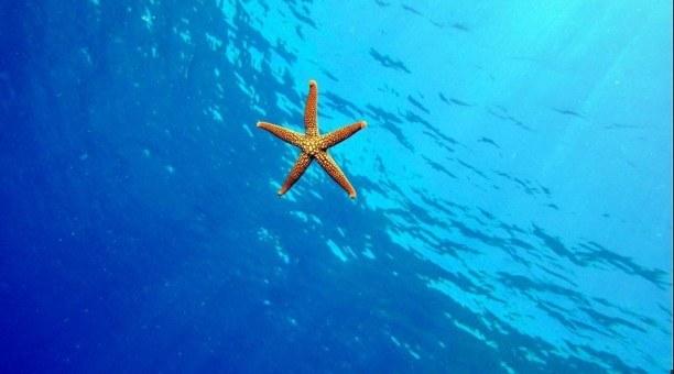 Great Barrier Reef, Queensland Australia