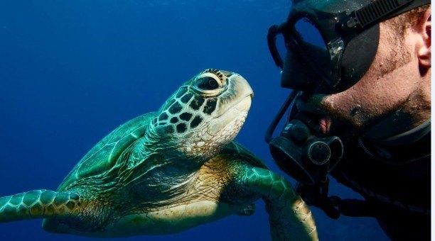 Great Barrier Reef Marine Life