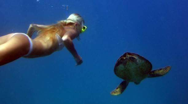 snorkel Great Barrier Reef