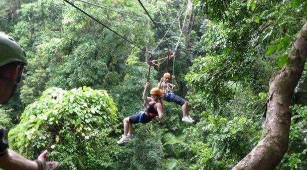 Jungle surfing takes you into the beating heart of the Daintree Rainforest on a guided zipline