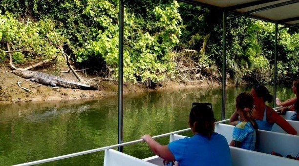 Daintree River Cruise, North Queensland Australia