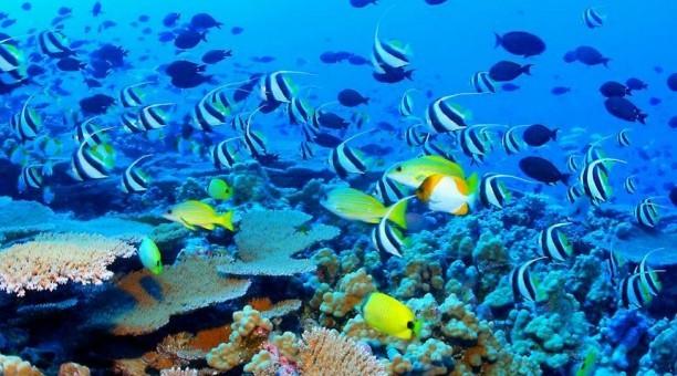 Reef Experience and Kuranda