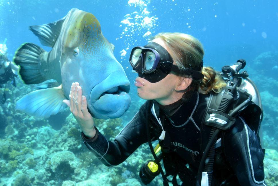 norman-reef