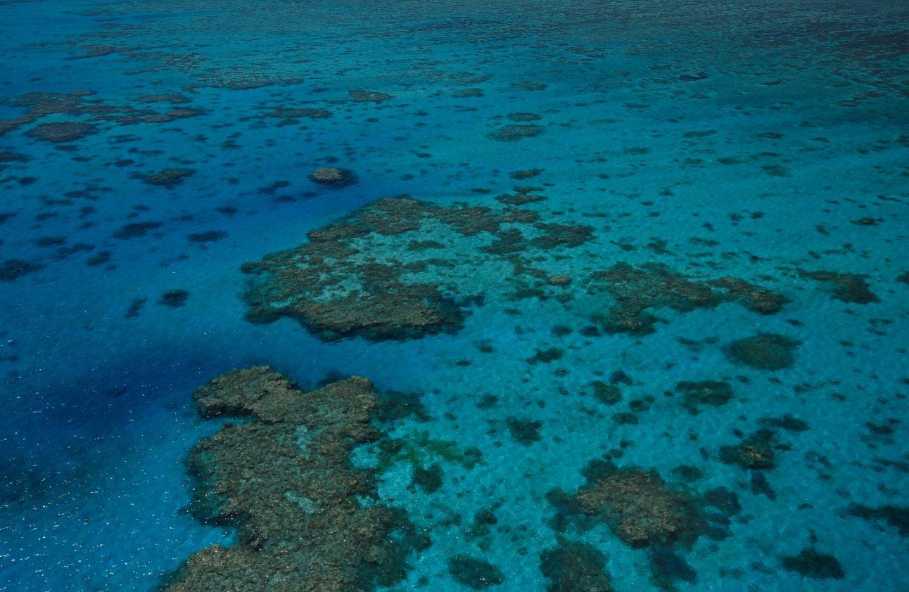 Coral-sea-www.divetrips