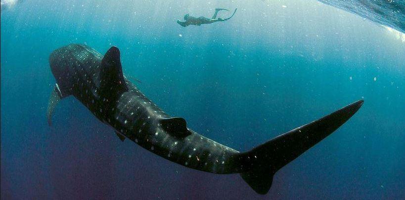 Ningaloo reef - Ningaloo reef dive ...