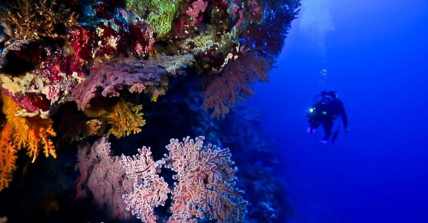 bougainville-reef