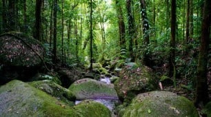 daintree world heritage rainforest