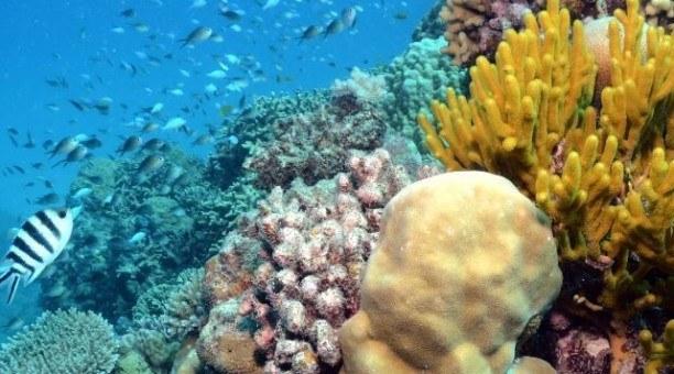 Australia's Great Barrier Reef should be on everyone bucket list