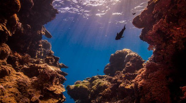 Explore the gutters and gullies at Hastings Reef