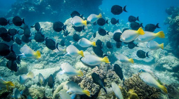 Swim with schools of surgeonfish and parrotfish grazing on the coral rock