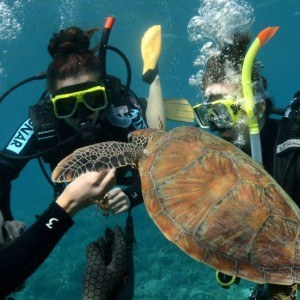 3 Day Liveaboard Resort Dive