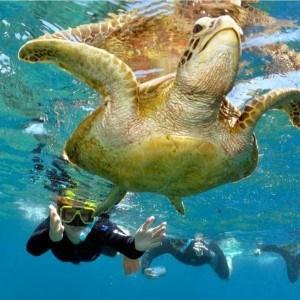 Luxury Reef and Rainforest (2 days)
