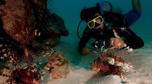 Great Barrier Reef lionfish, North Queensland Australia