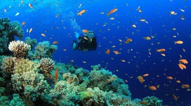 Great Barrier Reef Scuba Diving Australia